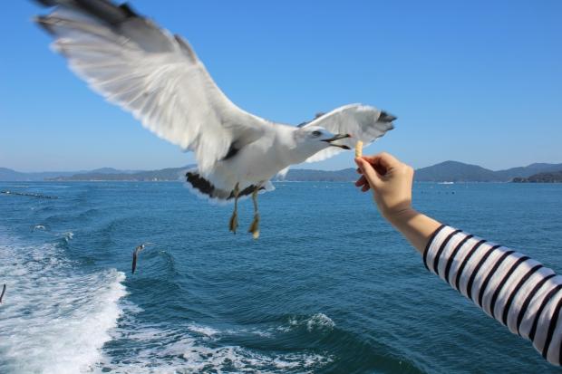 うまくつかむ鳥|猫島(猫の島)で有名な『田代島』を中心に巡る1泊2日石巻離島の旅