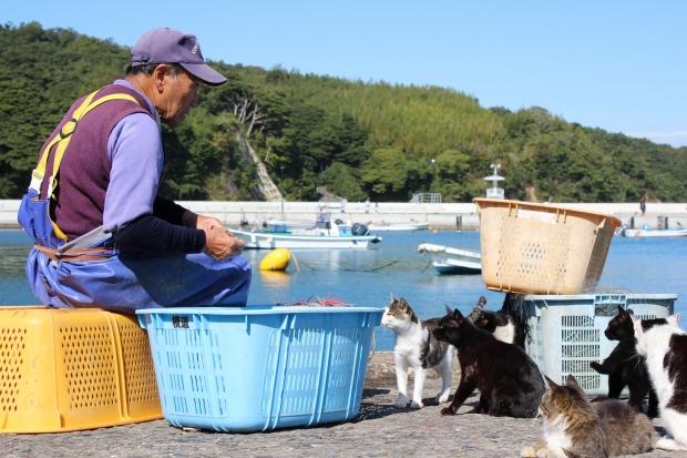 田代島の猫その3|猫島(猫の島)で有名な『田代島』を中心に巡る1泊2日石巻離島の旅