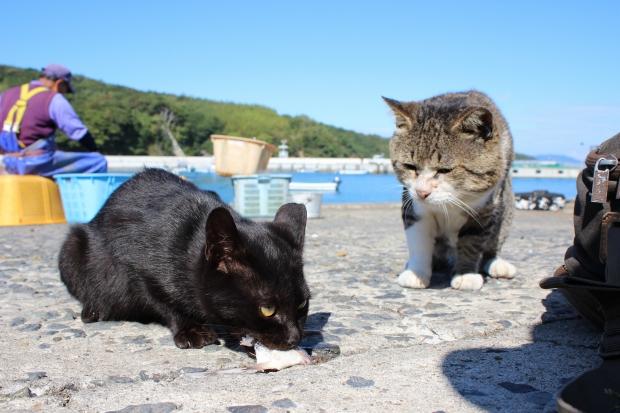 田代島の猫その4|猫島(猫の島)で有名な『田代島』を中心に巡る1泊2日石巻離島の旅