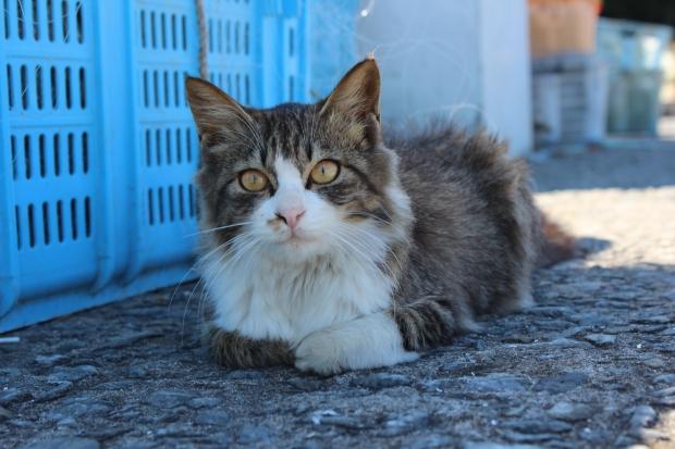 田代島の猫その5|猫島(猫の島)で有名な『田代島』を中心に巡る1泊2日石巻離島の旅