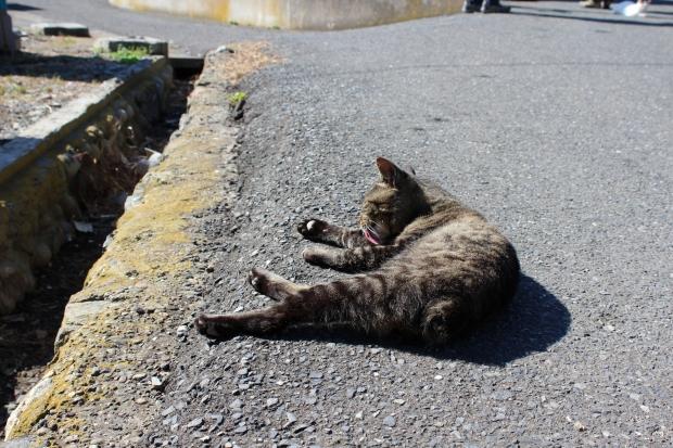 田代島の猫その6|猫島(猫の島)で有名な『田代島』を中心に巡る1泊2日石巻離島の旅