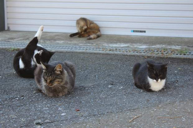 田代島の猫その7|猫島(猫の島)で有名な『田代島』を中心に巡る1泊2日石巻離島の旅
