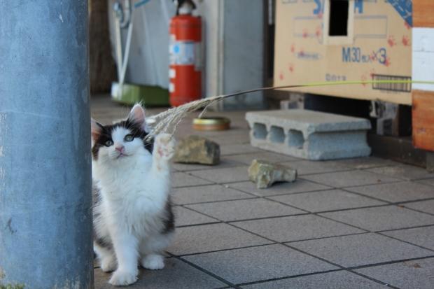 田代島の猫その10|猫島(猫の島)で有名な『田代島』を中心に巡る1泊2日石巻離島の旅