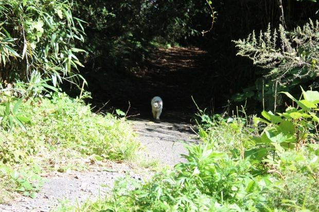 田代島の猫その11|猫島(猫の島)で有名な『田代島』を中心に巡る1泊2日石巻離島の旅