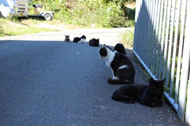 田代島の猫その12|猫島(猫の島)で有名な『田代島』を中心に巡る1泊2日石巻離島の旅