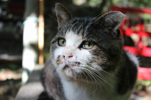 田代島の猫その14|猫島(猫の島)で有名な『田代島』を中心に巡る1泊2日石巻離島の旅