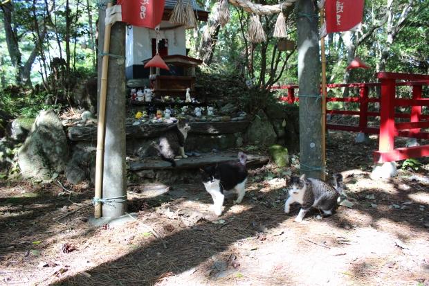 田代島の猫その13|猫島(猫の島)で有名な『田代島』を中心に巡る1泊2日石巻離島の旅