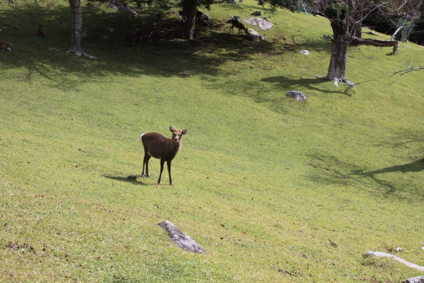 金華山の黄金山神社の鹿さん|猫島(猫の島)で有名な『田代島』を中心に巡る1泊2日石巻離島の旅