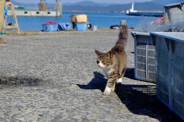田代島の猫その2|猫島(猫の島)で有名な『田代島』を中心に巡る1泊2日石巻離島の旅