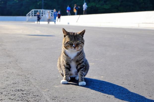 田代島の猫その1|猫島(猫の島)で有名な『田代島』を中心に巡る1泊2日石巻離島の旅